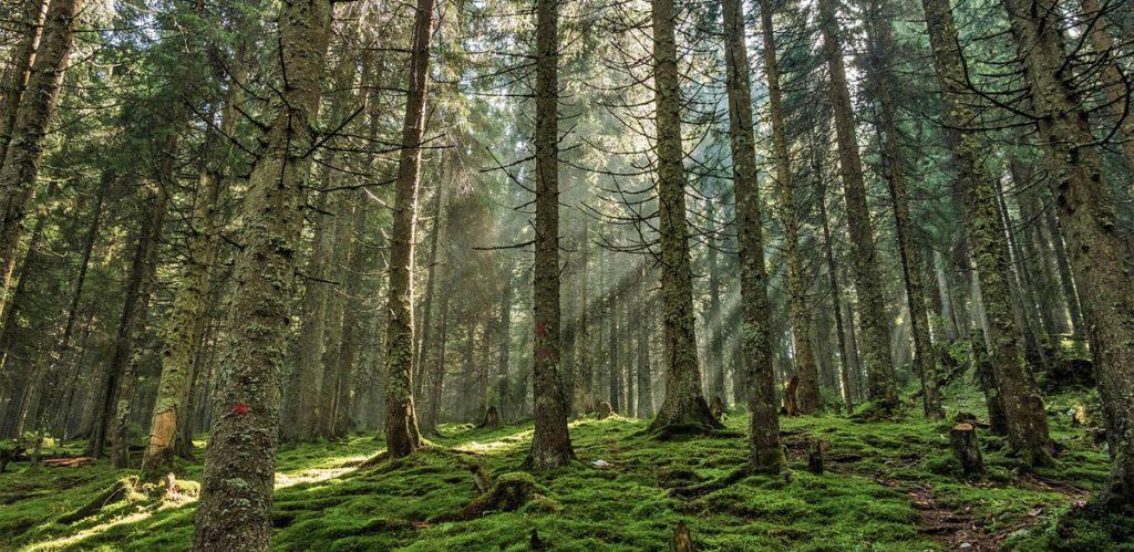 Lusenskogen Upplandsleden Knivsta