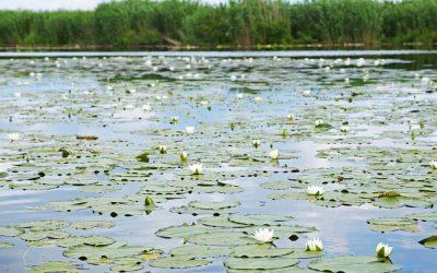 Säbysjön i natursköna Noor