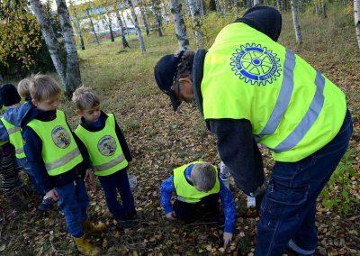 Knivsta Rotary plantering av Kungsängsliljor